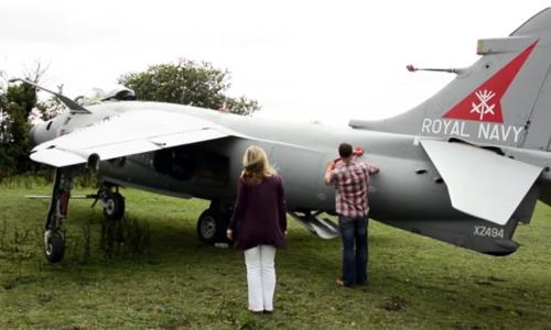 Harrier in the back garden